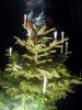 Weihnachtsfeier 2004_17